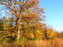 Eichen-Baum und Grasland Stockfotografie