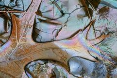Eichen-Blatt-und Betriebsschmieröle Stockbild