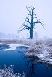 Eichen in der Winteraura Lizenzfreies Stockfoto