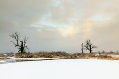 Eichen in der Winteraura Lizenzfreie Stockfotografie