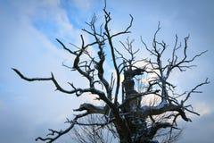 Eichen in der Winteraura Lizenzfreie Stockbilder