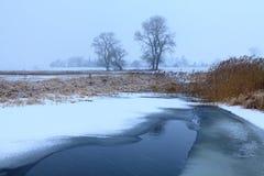 Eichen in der Winteraura Lizenzfreies Stockbild