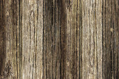 Eichen-Holz-Vorstand Lizenzfreies Stockbild