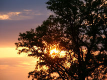 Eichen-Sonnenuntergang-Schattenbild Stockbild