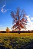 Eichen-und Ahornholz-Bäume in der Fall-Farbe in einem Park Lizenzfreie Stockfotografie