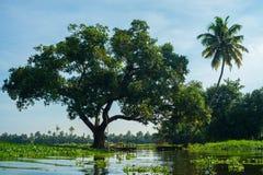 Eichen-und Kokosnuss-Baum entlang der Wasserlinie in Kerala, Indien lizenzfreie stockbilder