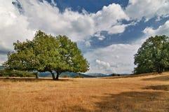 Eichen und trockenes Gras auf einem Hügel Lizenzfreies Stockbild