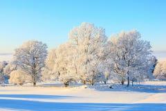 Eichenbaum im Winter Lizenzfreie Stockfotografie