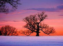 Eichenbaum am Sonnenuntergang Stockbild