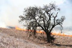 Eichenbaum und -feuer Stockfoto