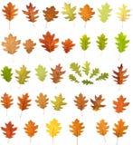 Eichenblätter auf Weiß Stockfotos