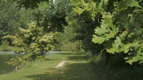 Eichenbl?tter, die eine Grasbahn nahe einem Teich in Italien gestalten stock video footage
