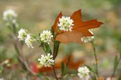 Eichenblatt auf dem Gras Stockfotografie