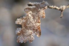 Eichenblatt bedeckt mit Schneenahaufnahme lizenzfreie stockbilder