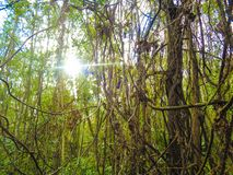 Eichenholzjahreszeit-Fotobild lizenzfreie stockfotografie