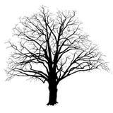 Eichenschattenbild mit den gefallenen Blättern Schwarzweiss Stockfotografie