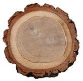 Eichenstammkreuzschnitt-Holzbeschaffenheit Lizenzfreies Stockbild