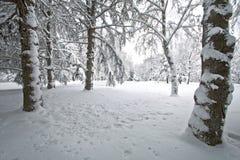 Eichenwald bedeckt mit Schnee stockfotos