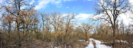 Eichenwald im Winter Stockbild