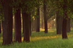 Eichenwaldung Stockfoto