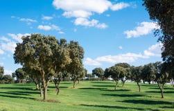 Eichenwaldung auf einer grünen Rasenfläche, unter einem blauen Himmel in Sping lizenzfreie stockbilder