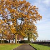 Eichenweg im Herbst Stockbild