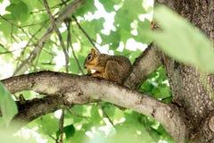 Eichhörnchen! Stockbilder