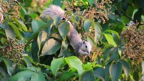 eichhörnchen stock footage