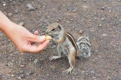 eichhörnchen Stockbilder