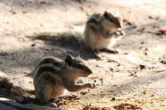 Eichhörnchen-Anbetungsgott Lizenzfreie Stockfotografie