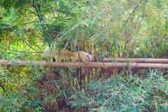 Eichhörnchen auf Bambus, kleines nettes Eichhörnchen Lizenzfreie Stockbilder