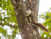 Eichhörnchen auf Baum mit bokeh Stockfotografie