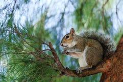 Eichhörnchen auf dem Baum lizenzfreie stockfotografie