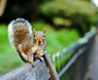 Eichhörnchen auf der Bank Lizenzfreies Stockfoto