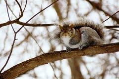 Eichhörnchen auf einem Baum Lizenzfreies Stockbild