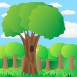 Eichhörnchen auf einem Baum im Wald. Stockfoto