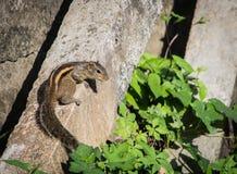 Eichhörnchen auf einem schwarzen Draht Lizenzfreie Stockbilder
