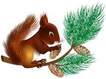 Eichhörnchen auf einer Kiefernniederlassung mit Kegeln im Winter Stockfotografie