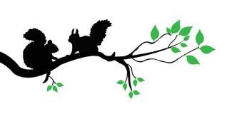 Eichhörnchen auf einer Niederlassung stock abbildung