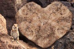 Eichhörnchen auf Hintergrund des geformten Felsens des Herzens Stockbild