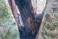 Eichhörnchen-Auswahl ein Buh Stockbilder