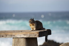 Eichhörnchen bei Sonnenuntergang Lizenzfreies Stockbild