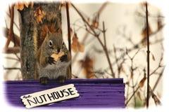 Eichhörnchen, das auf einem Nuss-Haus sitzt Lizenzfreie Stockbilder