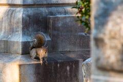 Eichhörnchen, das auf Finanzanzeige sitzt Stockfotografie