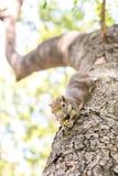 Eichhörnchen, das Nüsse anhaftet und isst Lizenzfreie Stockfotografie