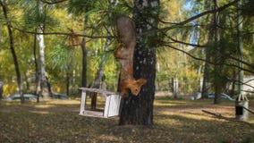 Eichhörnchen, das Nüsse von den Vogelzufuhren isst Lizenzfreie Stockfotografie