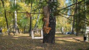 Eichhörnchen, das Nüsse von den Vogelzufuhren isst Lizenzfreie Stockfotos