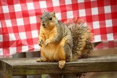 Eichhörnchen das; oves Camper und Picknicks Lizenzfreie Stockfotografie