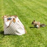 Eichhörnchen in der Wiese Lizenzfreies Stockfoto