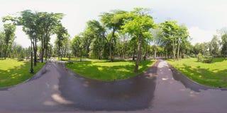 Eichhörnchen des Videos 360 im Park stock video